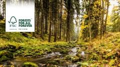 Certyfikat FSC – papier z recyklingu pozwoli ochronić lasy dla przyszłych pokoleń – opinie Etisoft