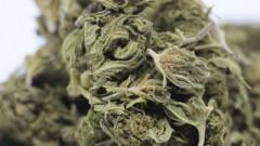 Zachodniopomorska KAS ujawniła i zabezpieczyła narkotyki