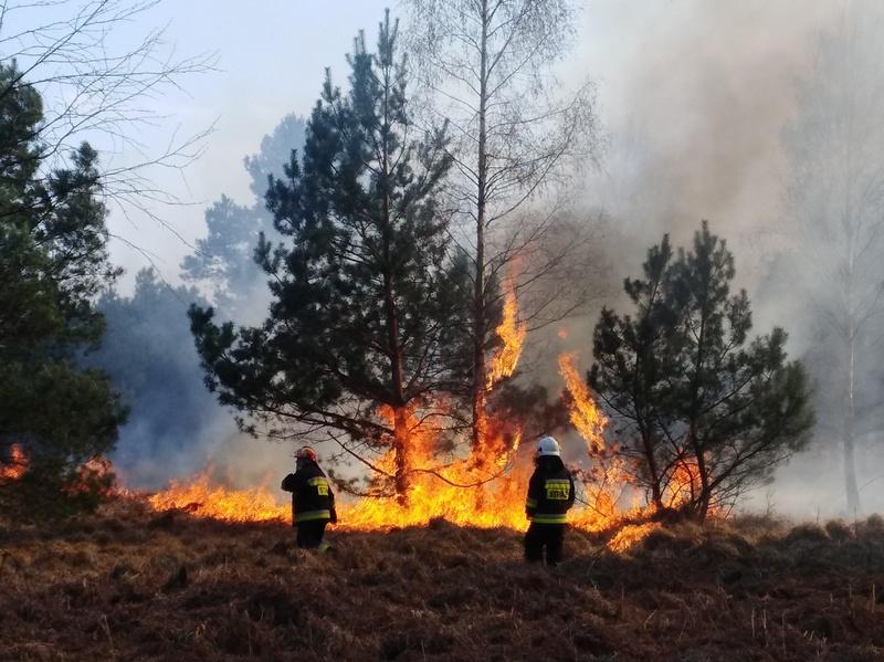 Bezpośrednia ochrona przeciwpożarowa na terenie RDLP Szczecin