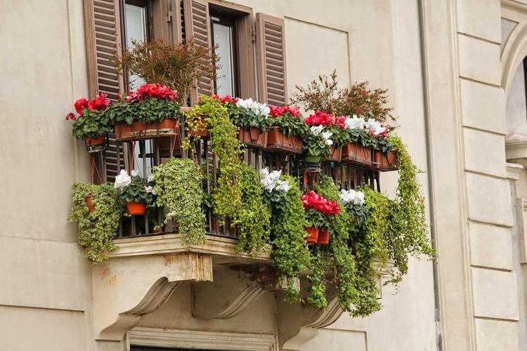 Jakie kwiaty uprawiać w donicach na balkonie? Doradzamy!