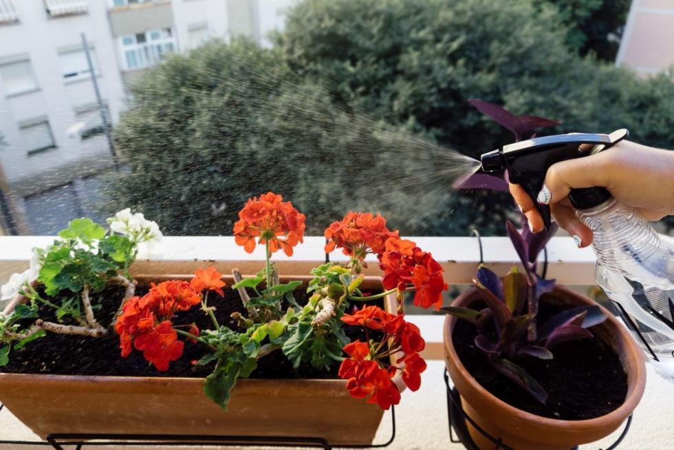 Naturalne sposoby na szkodniki w kwiatach balkonowych