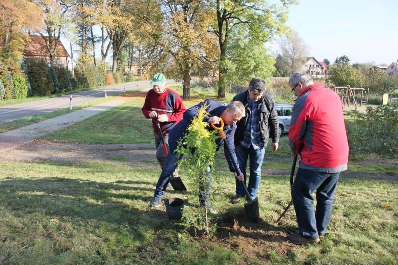 Ozdobne drzewa posadzone w Karsku