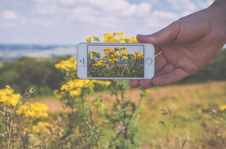 Permakultura – naukowa obserwacja we własnym ogrodzie