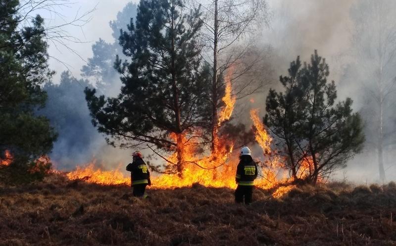 Rośnie zagrożenie pożarowe w lasach…
