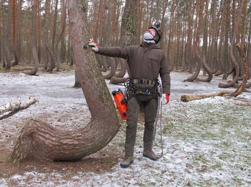 Szyszkobranie w Krzywym Lesie