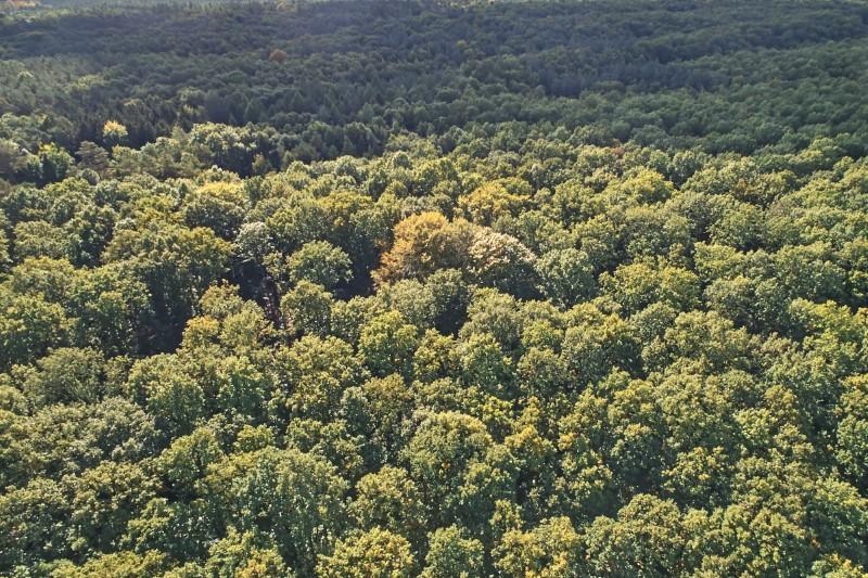 Zbiór żołędzi na terenie Regionalnej Dyrekcji Lasów Państwowych w Szczecinie