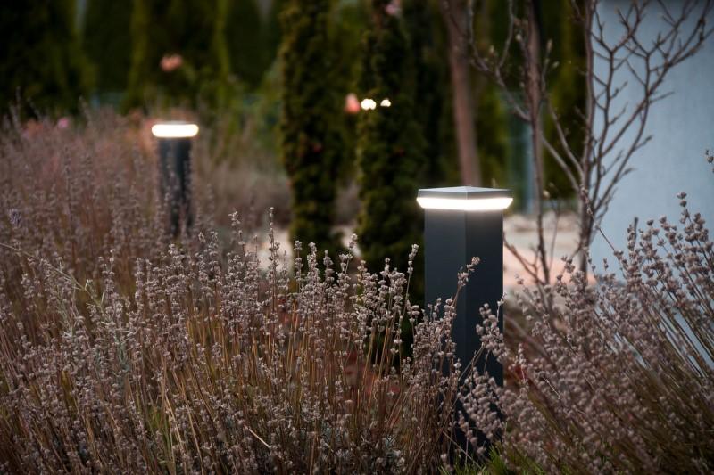 Zobacz swój ogród w nowym świetle – jak efektywnie wykorzystać czas spędzany w domu?