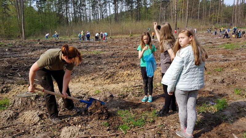 Zapraszamy na wspólne sadzenie lasu w trzech puszczach sąsiadujących ze Szczecinem
