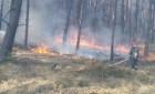 Pracowite święta strażaków i leśników - 93 pożary lasów w kwietniu