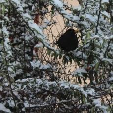 Zima w Gryficach...