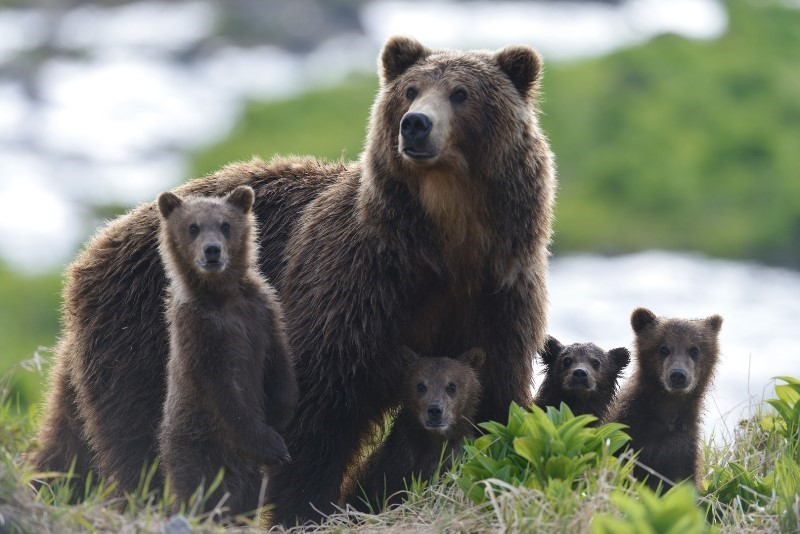 Photo 1 KAMCHATKA_BEARS_2
