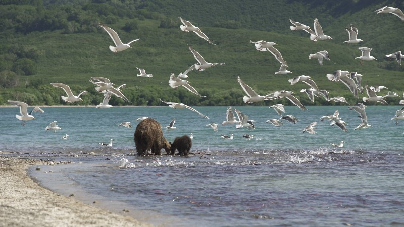 Photo 2 KAMCHATKA_BEARS_3